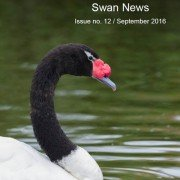 swannews12cover